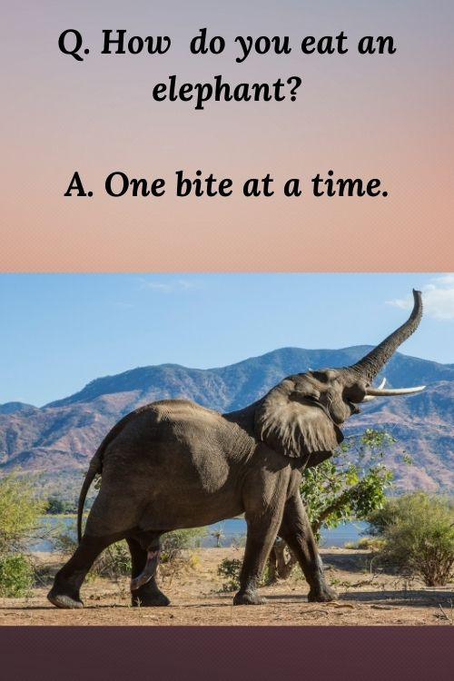 Q. How do you eat an elephant_ A. One bite at a time.